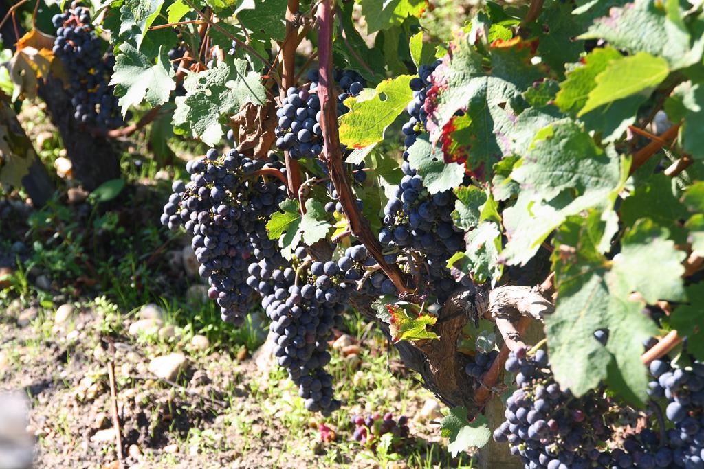 Novela In Vino Veritas, En el Vino está La Verdad - Virginia Gasull